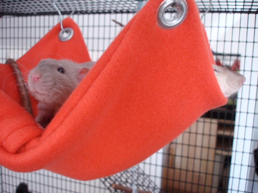 Long story short, we got these rats, Taffy and Toffee, last weekend and the woman we got them from gave us a hammock to borrow until we could make our own ...